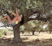 Tree Of Life - Sapphira 5