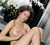 Jackie D - Orario - MetArt 8