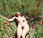 Nastia A - Field Of Red 2 - Erotic Beauty 3