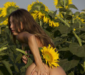 Rimma A - The Sunflower - Erotic Beauty 2