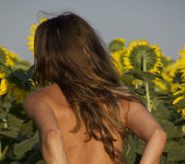 Rimma A - The Sunflower - Erotic Beauty 13