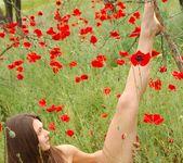 Poppies - Anne - Femjoy 12