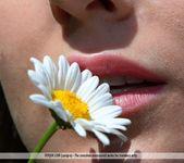 Daisies - Merit - Femjoy 14