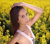 Colza Field - Paula Shy 7
