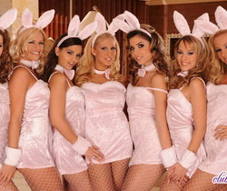 Sandy, Eve, peaches, Clara, Hope - Bunnies