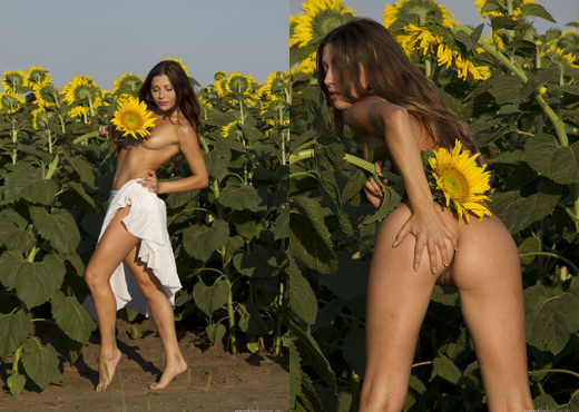 Rimma A - The Sunflower - Erotic Beauty - Solo Image Gallery